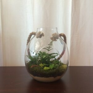 Just Priceless Terrarium