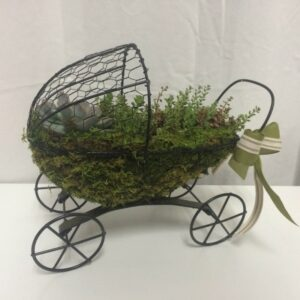 Just Priceless Succulent Buggy