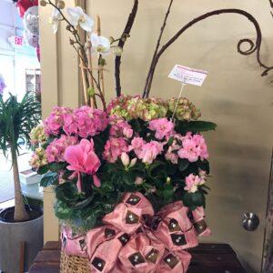 plant arrangement #1