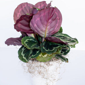 Just Priceless - Plants - August 2020-26